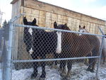 Horses have to be kept under maximum security.